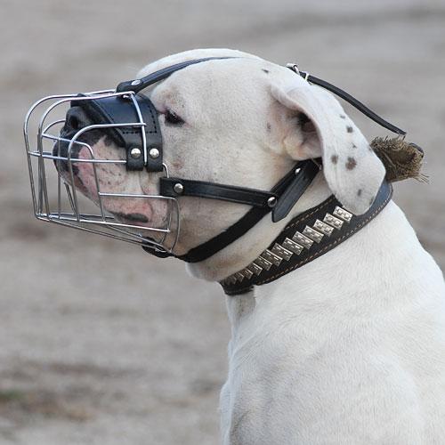 Muselière panier en acier «Universelle» pour Pitbull