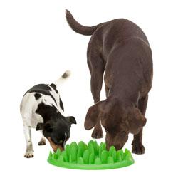 Gamelle pour chiens
